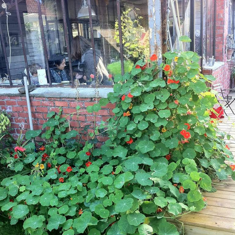 Détails de la verrière patinée et du jardin qui prend ses aises.